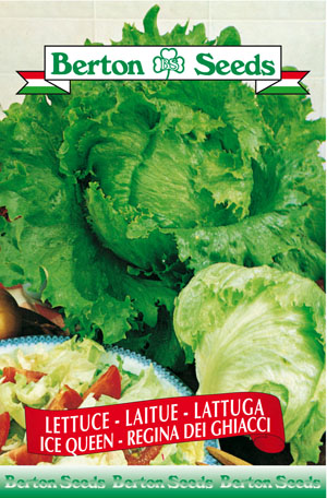 Ice Queen Lettuce Seeds