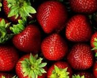 Hecker Everbearing Strawberry