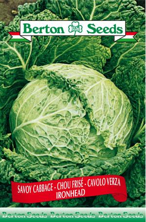 Iron Head Savoy Cabbage Seeds